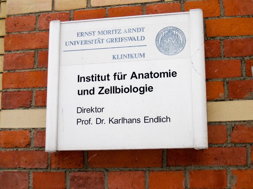 Anatomie Greifswald